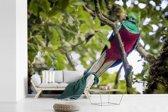 Fotobehang vinyl - Quetzal op een tak breedte 360 cm x hoogte 240 cm - Foto print op behang (in 7 formaten beschikbaar)