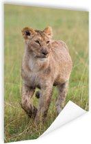 Lopende Afrikaanse leeuwin Poster 60x90 cm - Foto print op Poster (wanddecoratie)