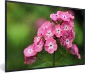 Foto in lijst - Roze vlambloemen met groene achtergrond fotolijst zwart 60x40 cm - Poster in lijst (Wanddecoratie woonkamer / slaapkamer)