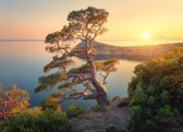 Papermoon Tree Mountain Sunset Vlies Fotobehang 300x223cm 6-Banen