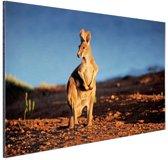Kangoeroe zonsondergang Aluminium 60x40 cm - Foto print op Aluminium (metaal wanddecoratie)