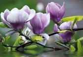 Fotobehang Flowers Magnolia Water | XXL - 312cm x 219cm | 130g/m2 Vlies