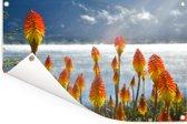 Close-up van kleurrijke bloemen voor een meer bij Nahuel Huapi Tuinposter 120x80 cm - Tuindoek / Buitencanvas / Schilderijen voor buiten (tuin decoratie)