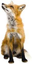 KEK Amsterdam Forest Friends: Fox - Muursticker - Multicolor