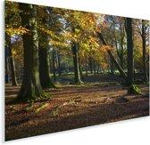 Herfstkleurige bomen in het Nationaal park Peak District in Engeland Plexiglas 90x60 cm - Foto print op Glas (Plexiglas wanddecoratie)