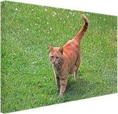 Rode kater in het gras Canvas 60x40 cm - Foto print op Canvas schilderij (Wanddecoratie)