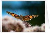 Bijzondere wenskaarten met exclusieve natuurfoto's - Vlinders