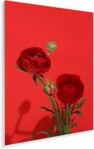 Rode boterbloemen op een rode achtergrond Plexiglas 80x120 cm - Foto print op Glas (Plexiglas wanddecoratie)