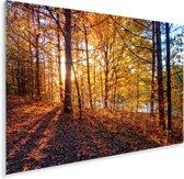 De herfstzon schijnt op de bladeren van een bos Plexiglas 90x60 cm - Foto print op Glas (Plexiglas wanddecoratie)