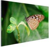 Vlinder op groen blad Aluminium 90x60 cm - Foto print op Aluminium (metaal wanddecoratie)