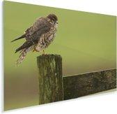 Smelleken staat op een hek Plexiglas 90x60 cm - Foto print op Glas (Plexiglas wanddecoratie)