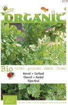 2 stuks Organic Kervel (Skal 14725)