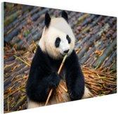 Reuzepanda die bamboe eet Glas 90x60 cm - Foto print op Glas (Plexiglas wanddecoratie)