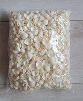 Witte Cockels schelpen klein 1 kilo (Cockels schelpen klein)