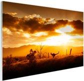 Kangoeroe bij zonsondergang Glas 60x40 cm - Foto print op Glas (Plexiglas wanddecoratie)