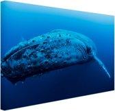 Jonge baleinwalvis onder water Canvas 30x20 cm - klein - Foto print op Canvas schilderij (Wanddecoratie woonkamer / slaapkamer) / Dieren Canvas Schilderijen