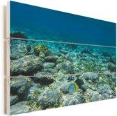 Het rif van de Glover's Reef in Belize Vurenhout met planken 60x40 cm - Foto print op Hout (Wanddecoratie)