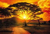 Fotobehang Sunset Africa Nature Tree | PANORAMIC - 250cm x 104cm | 130g/m2 Vlies