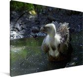 Badderende vale gier Canvas 60x40 cm - Foto print op Canvas schilderij (Wanddecoratie woonkamer / slaapkamer)