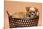 Een Yorkshire Terrier zit in een mand Aluminium 180x120 cm - Foto print op Aluminium (metaal wanddecoratie) XXL / Groot formaat!