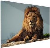 FotoCadeau.nl - Rustende leeuw op een rotsblok Glas 120x80 cm - Foto print op Glas (Plexiglas wanddecoratie)
