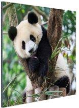 Panda welp Aluminium 60x40 cm - Foto print op Aluminium (metaal wanddecoratie)