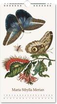 Verjaardagskalender insecten, Maria Sibylla Merian