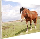 FotoCadeau.nl - Paard staat in gras Hout 60x40 cm - Foto print op Hout (Wanddecoratie)