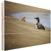 Ijsduiker op het strand Vurenhout met planken 30x20 cm - klein - Foto print op Hout (Wanddecoratie)