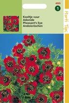Hortitops Zaden - Adonis Aestivalis Roodbloeiend
