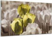 Glasschilderij Tulpen   Bruin, Groen, Zwart   120x70cm 1Luik   Foto print op Glas    F002765