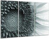 Glas schilderij Bloem | Grijs, Groen | 120x80cm 3Luik | Foto print op Glas |  F006680