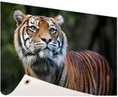 Sumatraanse tijger portret Tuinposter 120x80 cm - Foto op Tuinposter / Schilderijen voor buiten (tuin decoratie)