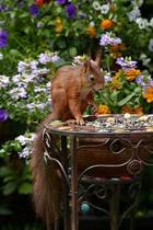 Squirrel in the Garden Journal