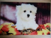 Deurmat 40x60 Maltezer Puppy