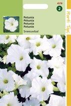 Hortitops Zaden - Petunia Sneeuwbal