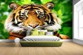 Sumatraanse tijger jungle Fotobehang 380x265