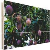 Rijpende mango's aan de boom Vurenhout met planken 120x80 cm - Foto print op Hout (Wanddecoratie)