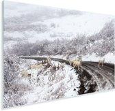 Dalschapen op de weg langs het besneeuwde landschap van het nationaal park Denali Plexiglas 90x60 cm - Foto print op Glas (Plexiglas wanddecoratie)