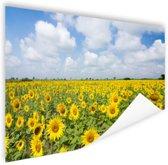 Zonnebloemen veld  Poster 150x75 cm - Foto print op Poster (wanddecoratie woonkamer / slaapkamer) / Bloemen Poster
