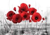 Fotobehang Flowers Poppies Nature | XXXL - 416cm x 254cm | 130g/m2 Vlies