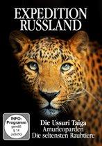 Amurleoparden Die Seltensten R