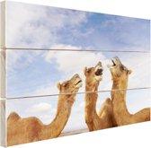 Kamelen in India Hout 80x60 cm - Foto print op Hout (Wanddecoratie)