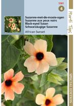 Hortitops Thunbergia alata African Sunset Mixed