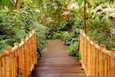 Fotobehang Brug, Natuur | Groen | 416x254