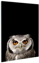 Portret uil Glas 40x60 cm - Foto print op Glas (Plexiglas wanddecoratie)