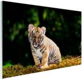 Tijgerwelp in het bos Glas 90x60 cm - Foto print op Glas (Plexiglas wanddecoratie)