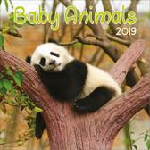 Kalender Baby Animals  (30 x 30)