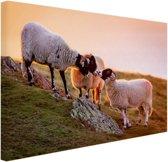 Drie schapen bij zonsopkomst Canvas 30x20 cm - klein - Foto print op Canvas schilderij (Wanddecoratie woonkamer / slaapkamer) / Dieren Canvas Schilderijen