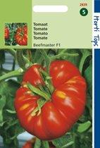 Tomaten Beefmaster F1